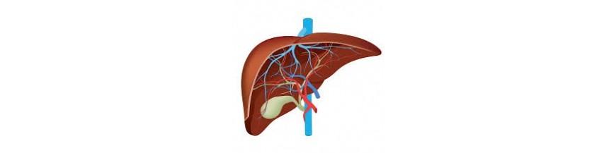 Hígado y Vías Biliares